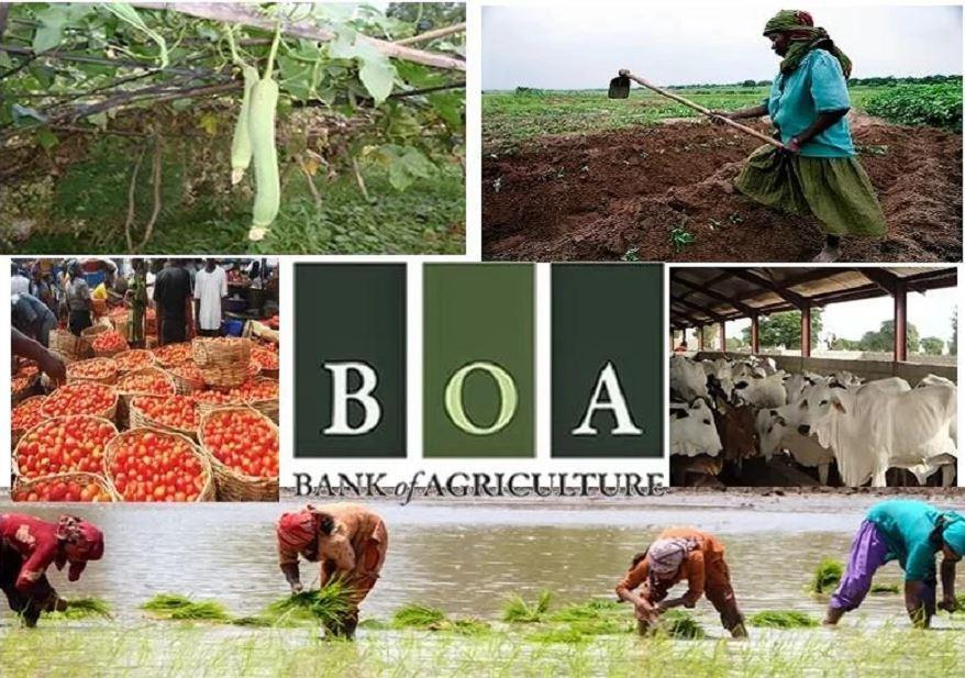 agriculture in nigeria Examine some of the challenges of agriculture in nigeria and why nigeria with her vast and rich agricultural soil.